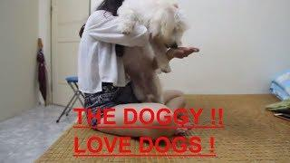 Smart Dog Playing With Cute Girl At Home - Lovely smart girl Playing Baby Cute Dogs #19
