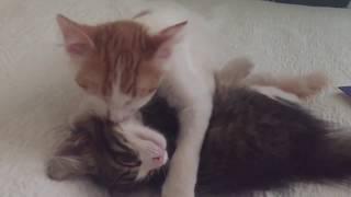 When a man loves a woman (kittens in love)