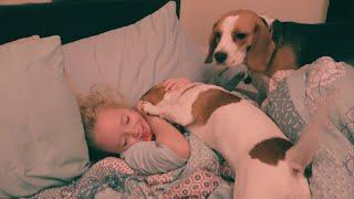 Our Dogs Wake Up a Cute Girl with Love and Kisses | Charlie the Dog and Baby Video