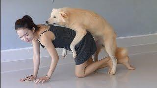 Funny dog riding on owner at home, Cute girl makes super fun with home pet
