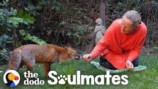 Watch How This Woman Befriended A Wild Fox | The Dodo Soulmates