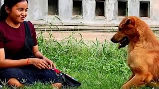 Dog & Owner do Face funny????Video clip 2019 beautiful  girl love dog her
