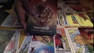 Tarot Scorpio woman month January: Finance, Education, Work and Love