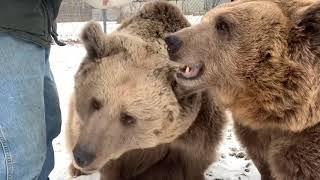 More happy birthday to the bears video! Girls turn!