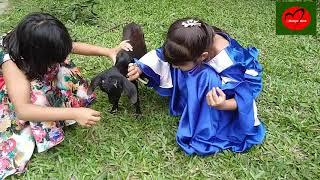 Funny and Cute Baby Goat Videos Compilation-2018 | Cute Girls Love and Play With Goats my Bangladesh