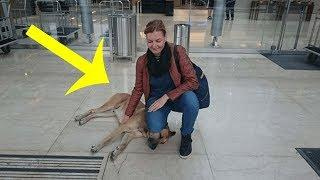Woman Befriends A Homeless Dog On The Street  Then He Does Something She'll Never Forget