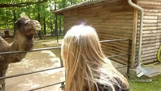 Camel bites girls head || Viral Video UK