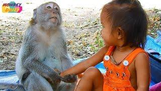 Monkey Sok love & friendly with Little girl | Sok happy dancing after girl dance | Monkey Daily 2059