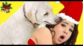 ❤Amazing Love Girl, Merry Christmas 2019 with Lovely Girl and cute Dog - Girls and Tusty Decorate