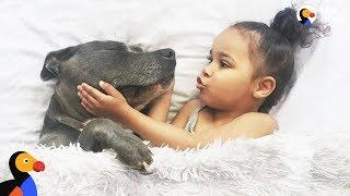 Girls Love Their Pit Bull Dogs | The Dodo